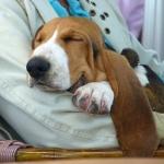 slapende-hond-2jpg